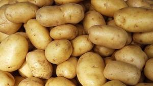 Govt. revises potato price
