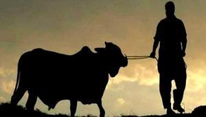 কোরবানির ইতিহাস তাৎপর্য্য ও ফযিলত
