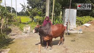অষ্টবর্গ গ্রামের 'গৃহলক্ষী জোস্না'র সন্তানতুল্য ষাড়