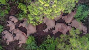 Migrating elephant herd continues to wander in China