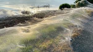 Giant spiderwebs blanket Australia