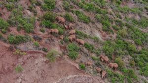 Zooming into the life, habitat of China's wandering elephants