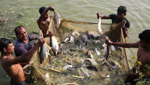 মুজিববর্ষে নেত্রকোনা-শরীয়তপুরকে 'মৎস্য গ্রাম' ঘোষণা