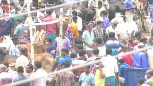 শার্শার সাতমাইল পশুহাটে বাড়ছে করোনা সংক্রমণ