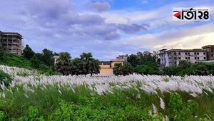 শুভ্রতার পরশে, কাশের ছোঁয়ায় কুমিল্লা বিশ্ববিদ্যালয়