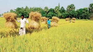 Incentives of Tk. 3000 crore at 4% interest for farmers