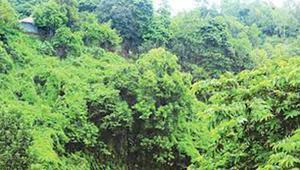 হিমছড়ির ৭০০ একর রক্ষিত বনভূমি বরাদ্দে উদ্বেগ