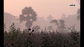 কুয়াশার চাদরে ঢেকে আছে বিরুলিয়া ইউনিয়নের গোলাপ রাজ্য।