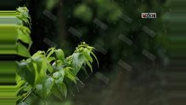 রাজধানীতে সকাল থেকেই বৃষ্টি। ছবি : সুমন শেখ