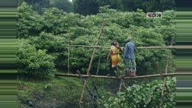 ভোরে গাজরা ফুলের বাগান থেকে ফুল তুলতে সাঁকো পাড় হচ্ছেন দুই নারী শ্রমিক। ছবিটি রুপগঞ্জ মুরাপাড়ার খালপাড় এলাকা থেকে তুলেছেন সুমন শেখ।