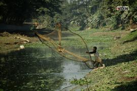 ইছামতি নদীতে ঝাকি জাল দিয়ে মাছ ধরতে ব্যস্ত জেলে। ছবিটি সিরাজদিখান, নিমতলা থেকে তুলেছেন সুমন শেখ।