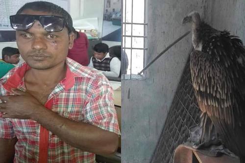 গাইবান্ধায় শকুনের আক্রমণে যুবক আহত