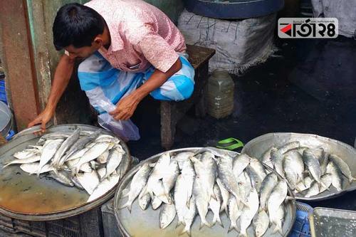 বরিশালে খুচরা বাজারে জাটকার সয়লাব