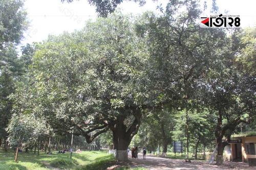 দাঁড়াও পথিকবর- আমার নাম 'কাইজেলিয়া'
