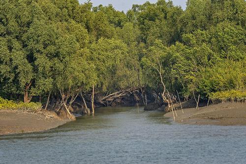 সুন্দরবনে নদীতে ডুবে জেলে নিখোঁজ