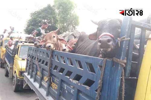 দৌলতদিয়ায় পারের অপেক্ষায় ৩ শতাধিক যানবাহন, বিপাকে গরুবাহী ট্রাক