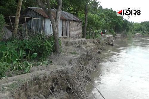 গড়াই নদীর ভাঙনে বিলীন হচ্ছে বসতভিটা-কৃষি জমি