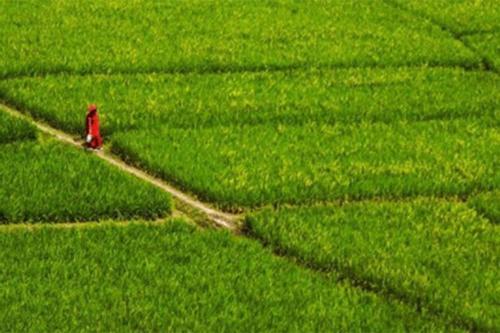 সিলেটে কমছে আবাদযোগ্য কৃষি জমির পরিমাণ