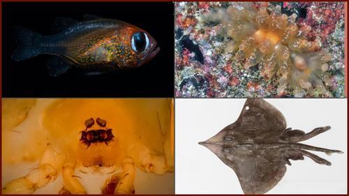 নতুন ৭১ প্রজাতির আবিষ্কার