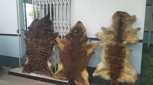 রাজধানীতে পাখি ও বন্যপ্রাণীর চামড়া উদ্ধার