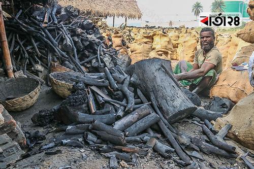 খুলনায় কাঠ পুড়িয়ে কয়লা তৈরিতে হুমকিতে পরিবেশ