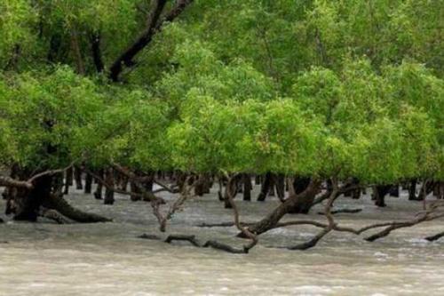 সুন্দরবনে 'বন্দুকযুদ্ধে' ডাকাত নিহত