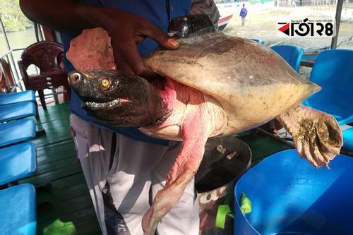 ট্রান্সমিটার সংযোজিত 'বিরল কচ্ছপ' বিক্রিকালে উদ্ধার