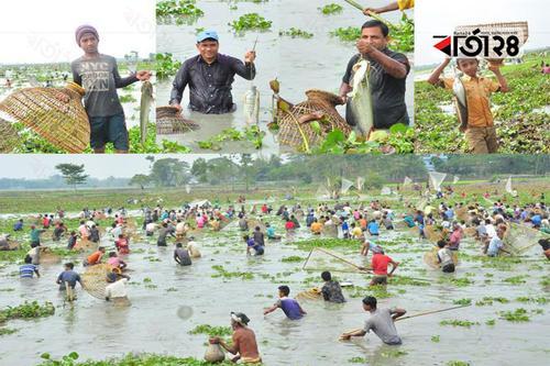 'পলো বাওয়া' উৎসবে মেতেছিলো গোয়াহারি গ্রামবাসী