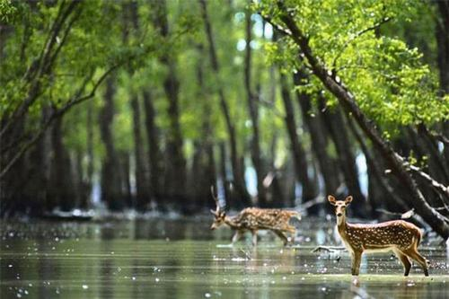WHC not to include the Sundarbans in endangered list