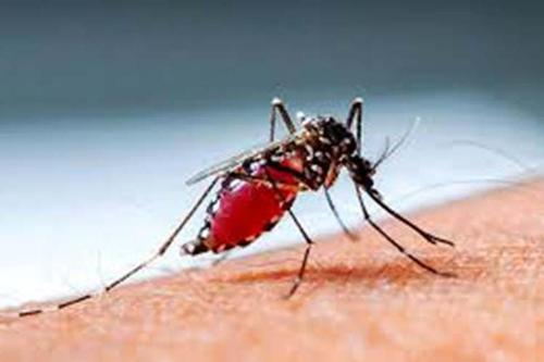 HC wants measures to control Dengue within 24hrs