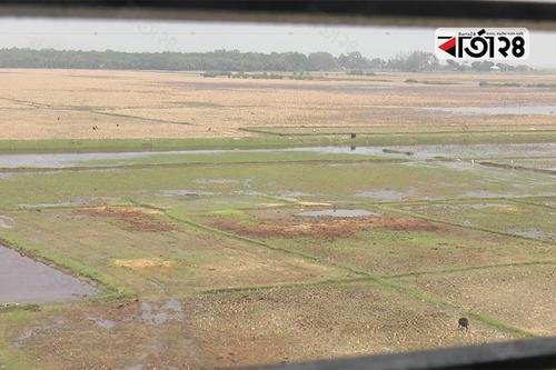 ভোলার সংরক্ষিত বনাঞ্চলের জমিতে চাষাবাদ