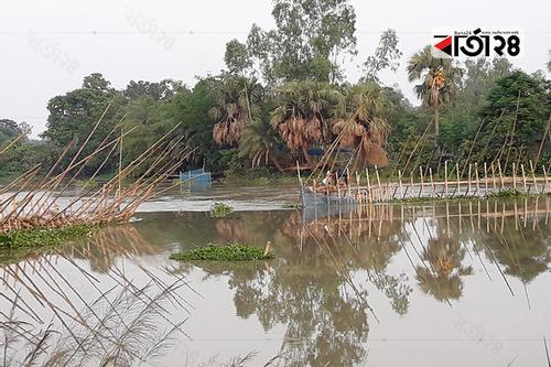 নাগর নদে বাঁধ ও সুতি জাল দিয়ে মাছ শিকার