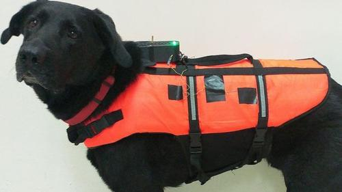 Tai becomes first remote controlled dog