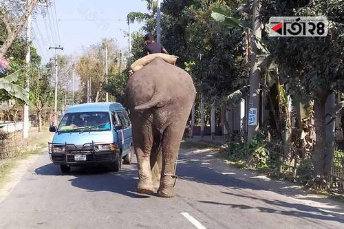 লালমনিরহাট-বুড়িমারী মহাসড়কে হাতি দিয়ে চাঁদাবাজি!