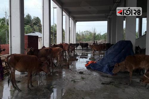সোনাগাজীতে অর্ধশতাধিক ঘরবাড়ি বিধ্বস্ত