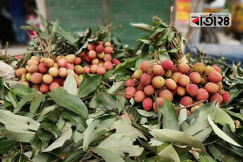 রংপুরে কাঁচা লিচুতে ভরা ফল বাজার