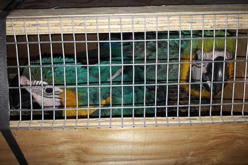 শাহাজালালে ২৪ বিরল প্রজাতির বিদেশি পাখি আটক