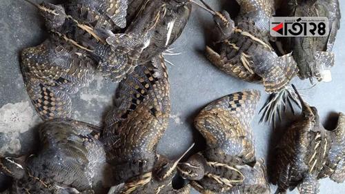 গাইবান্ধায় পাখি শিকার, একজনের কারাদণ্ড