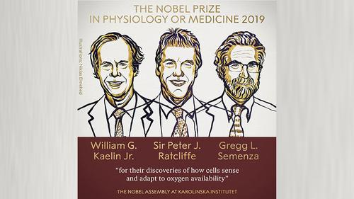 Three US, UK scientists share Nobel Prize for medicine