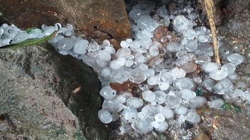 নাসিরনগরে শিলা বৃষ্টিতে ফসলের ব্যাপক ক্ষতি