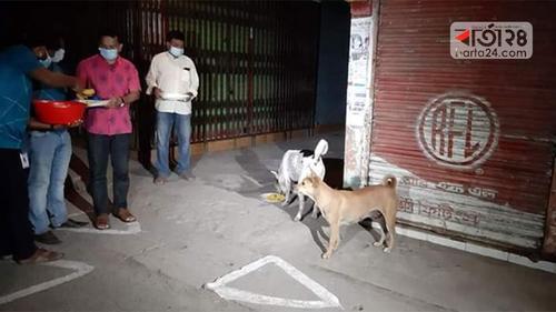 করোনা: অর্ধশতাধিক কুকুরকে খিচুড়ি খাওয়ালেন পিরোজপুরের ডিসি