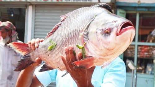 কুমিল্লায় নববর্ষে মাছের মেলা স্থগিত