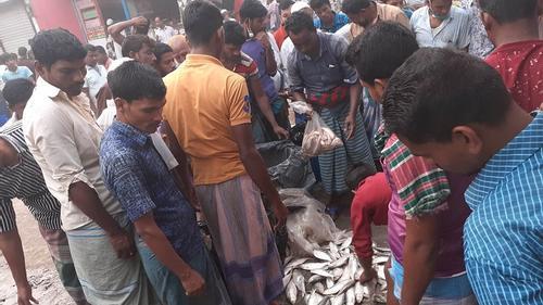 চলছে জাটকা বিক্রির মহোৎসব, 'চুপচাপ' প্রশাসন