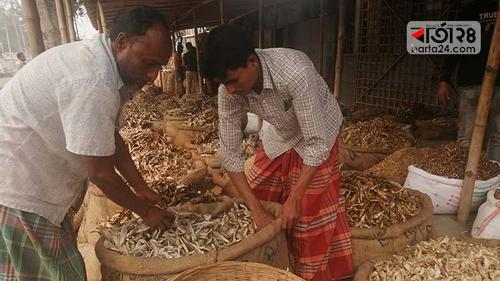 রংপুরে শুঁটকিতে বছরে দেড় কোটি টাকা লোকসান