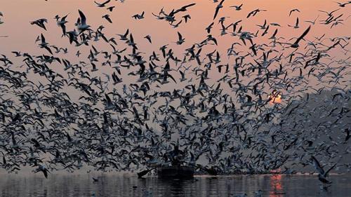 ভারতে দ্রুত হারে কমছে পাখির সংখ্যা