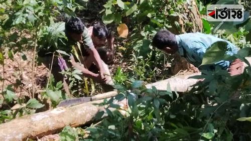 রেমা-কালেঙ্গা অভয়ারণ্যে গাছ পাচারের মহোৎসব