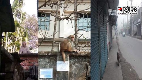 পাড়া-মহল্লায় ঘুরছে ক্ষুধার্ত বানর