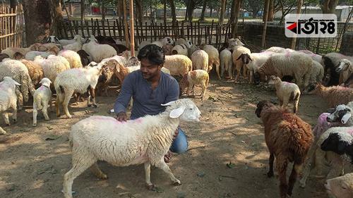 ভেড়া পুষে কারখানা গড়েছেন চাঁপাইনবাবগঞ্জের মাসুদ