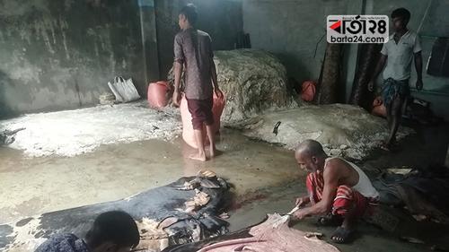 রংপুরে কোরবানির চামড়া কিনতে ঢিলেঢালা প্রস্তুতি
