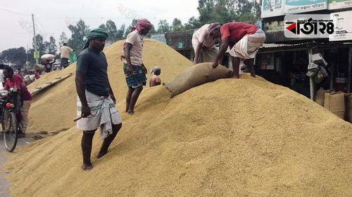 বগুড়ায় হাটে দাম বেশি, কৃষক খাদ্য বিভাগে ধান দিচ্ছেন না কৃষকরা